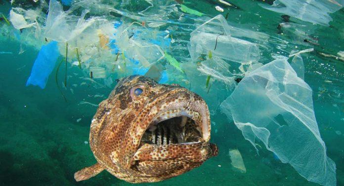 Microplastic Kills Marine Life