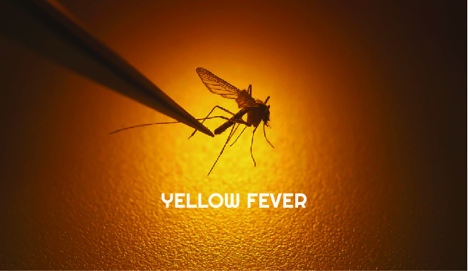 Yellow Fever 100